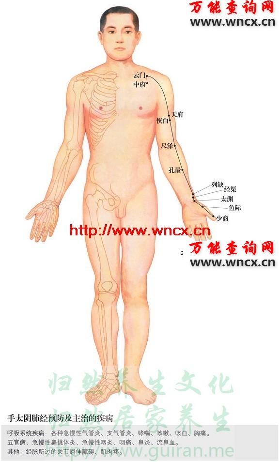 肺经穴位图 - 手太阴肺经穴位图 - 人体穴位图解大全
