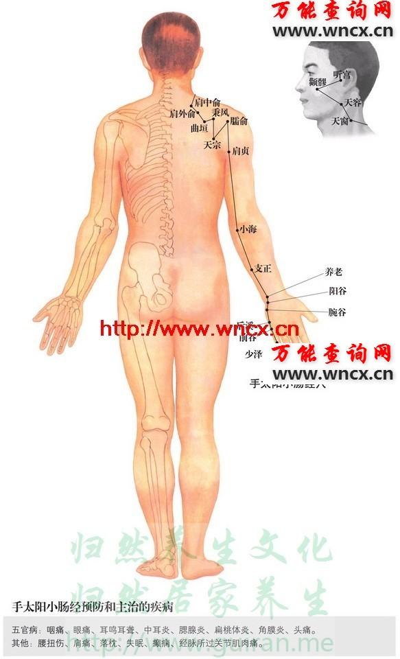 小肠经穴位图 - 手太阳小肠经穴位图 - 人体穴位图解大全