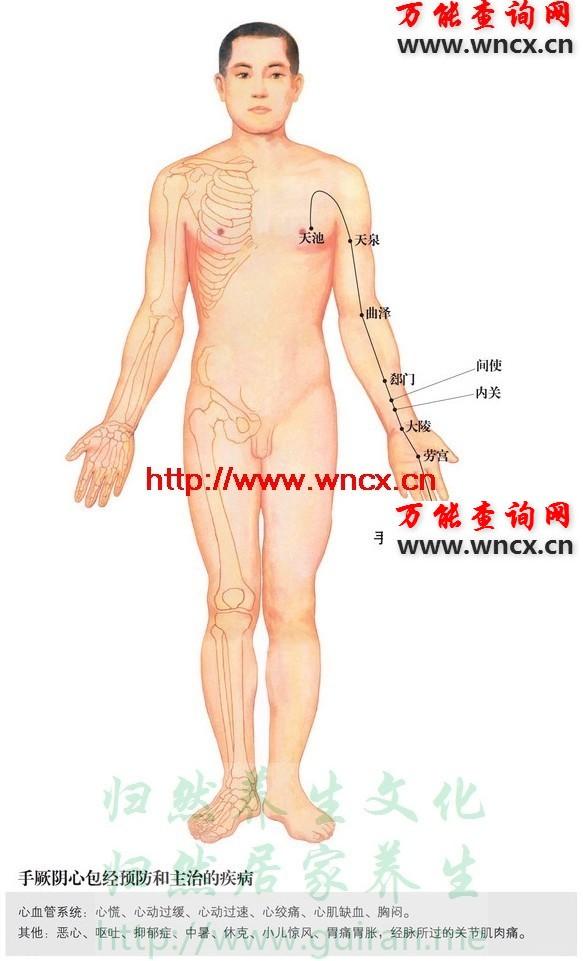 心包经穴位图 - 手厥阴心包经穴位图 - 人体穴位图解大全