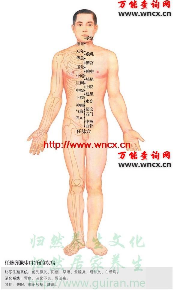 任脉穴位图 - 任脉 - 人体穴位图解大全